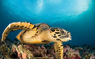 Spotlight: Marine Species in Chinese Medicine