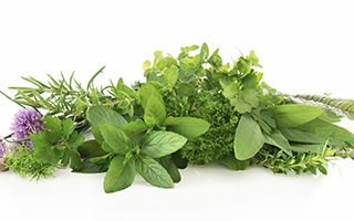 Spotlight on Phytoestrogenic Herbs