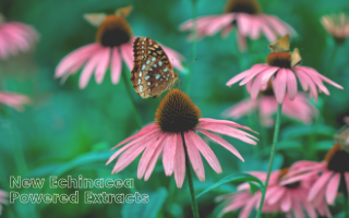 Introducing Our New High-Potency, Echinacea Extracts
